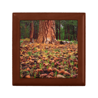Old-growth Ponderosa tree with pine cones Gift Box