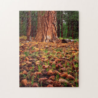 Old-growth Ponderosa tree with pine cones Jigsaw Puzzle