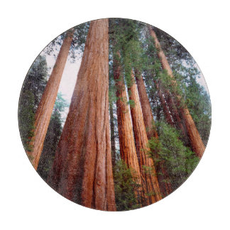 Old-growth Sequoia Redwood trees Cutting Board