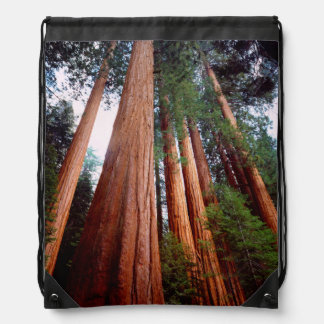 Old-growth Sequoia Redwood trees Drawstring Bag
