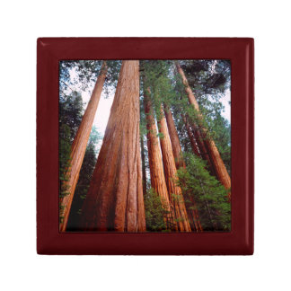 Old-growth Sequoia Redwood trees Gift Box