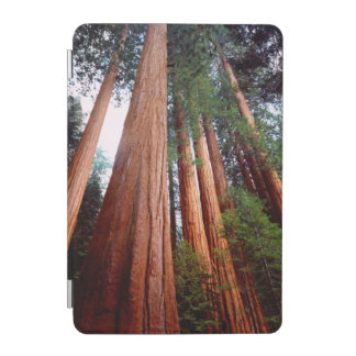 Old-growth Sequoia Redwood trees iPad Mini Cover