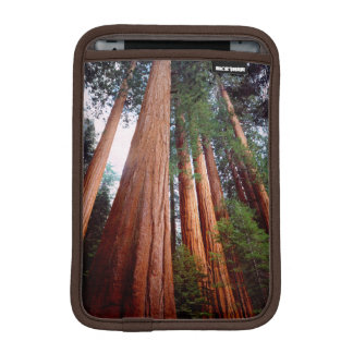 Old-growth Sequoia Redwood trees iPad Mini Sleeve
