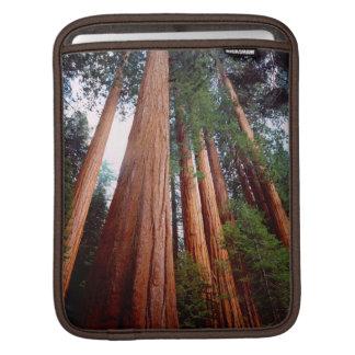Old-growth Sequoia Redwood trees iPad Sleeve