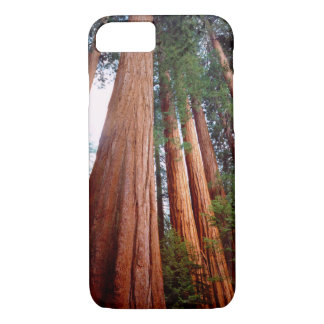 Old-growth Sequoia Redwood trees iPhone 8/7 Case