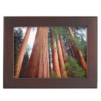 Old-growth Sequoia Redwood trees Keepsake Box