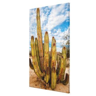 Old Man Cactus portrait, Mexico Canvas Print