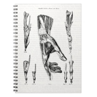 Old Medical Art Muscles of the Hand and Wrist Spiral Notebook