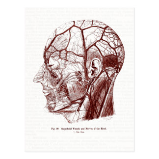 Old Medical Art Nerves of the Human Head Postcard