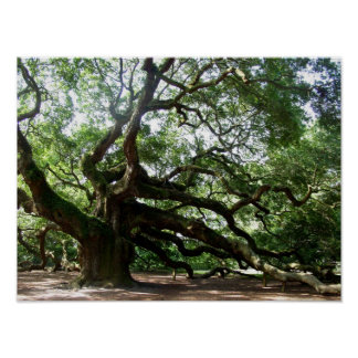 Old Oak Tree, Charleston South Carolina Print