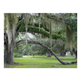 Old Oak Tree in City Park Photo Poster