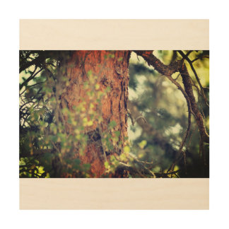 Old Pine Wood Wall Art