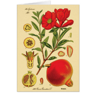Old Pomegranate Illustration Card