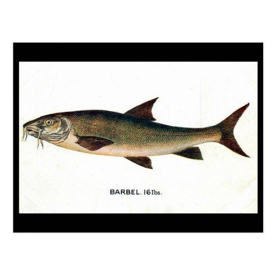 Old Postcard - Barbel