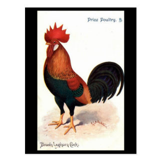 Old Postcard - Brown Leghorn Cock.