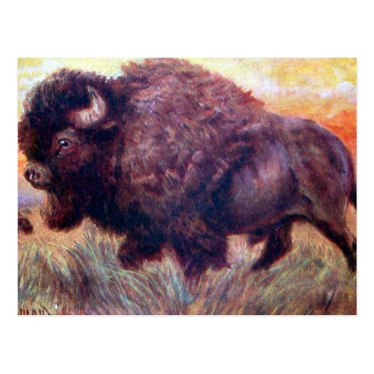Old Postcard - Buffalo