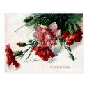 Old Postcard - Carnations