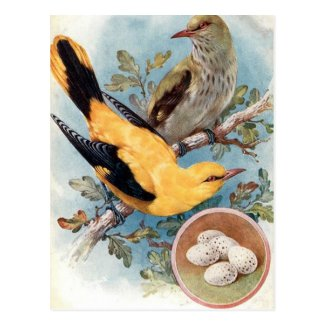 Old Postcard - Golden Oriole