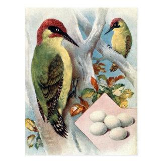 Old Postcard - Green Woodpecker