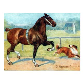 Old Postcard - Hackney Stallion