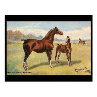 Old Postcard - Horses