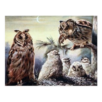 Old Postcard - Long-Eared Owls