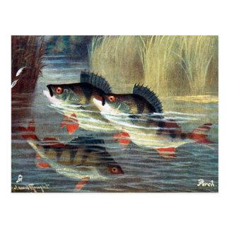 Old Postcard - Perch