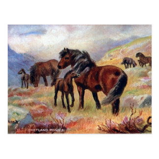 Old Postcard - Shetland Ponies