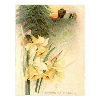 Old Postcard - Spring Flowers