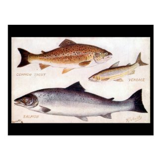 Old Postcard - Trout, Vendace and Salmon