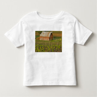 Old red barn at the edge of Zinfandel vineyard T Shirts