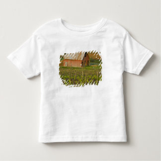 Old red barn at the edge of Zinfandel vineyard Toddler T-Shirt