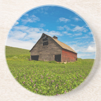 Old, red barn in field of chickpeas coaster