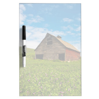 Old, red barn in field of chickpeas dry erase board