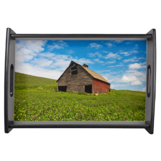 Old, red barn in field of chickpeas serving tray