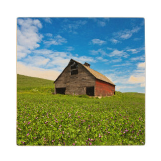 Old, red barn in field of chickpeas wood coaster