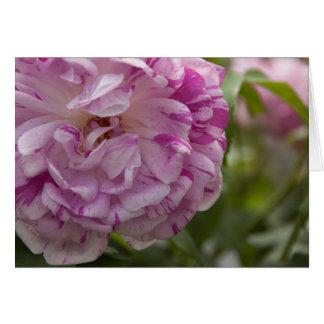 old rose greeting card
