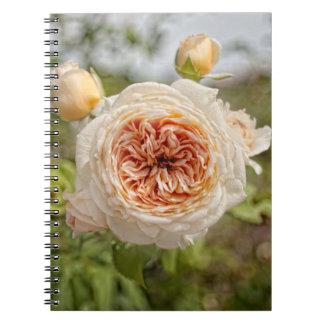 Old Rose Notebook