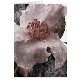 Old Timey Style White Blossom Blank Card