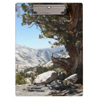 Old Tree at Yosemite National Park Clipboards