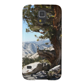 Old Tree at Yosemite National Park Galaxy S5 Cases