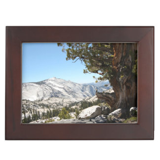 Old Tree at Yosemite National Park Keepsake Box