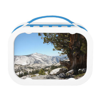 Old Tree at Yosemite National Park Lunchbox