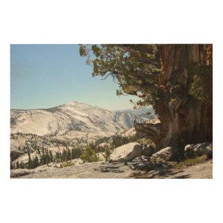 Old Tree at Yosemite National Park Wood Print