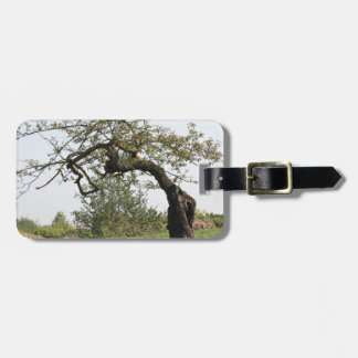 Old tree in Italy Luggage Tag