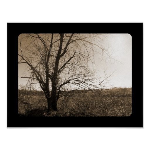 Old Tree In Winter Poster