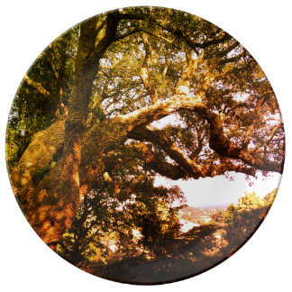 Old Tree Photo Decorative Porcelain Plate