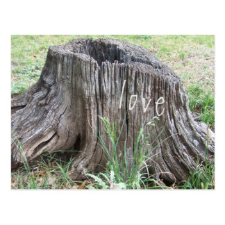 old tree stump with love postcard