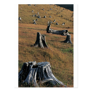 Old tree stumps on farmland postcard