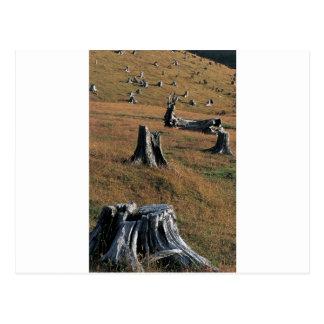 Old tree stumps on farmland postcard